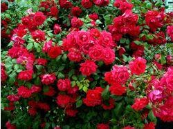 Посмотреть фото цветы 3
