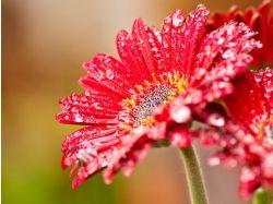 Посмотреть фото цветы 4