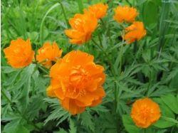 Посмотреть фото цветы 5