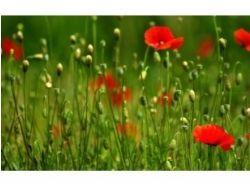 Посмотреть фото цветы 6