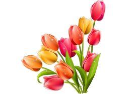 Посмотреть фото цветы 7