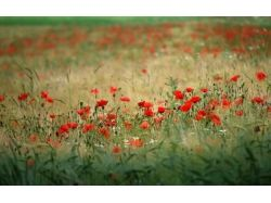 Посмотреть фото цветы 8