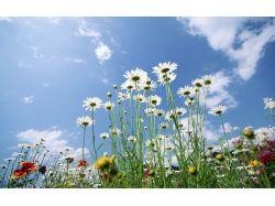 Фото цветов луговых