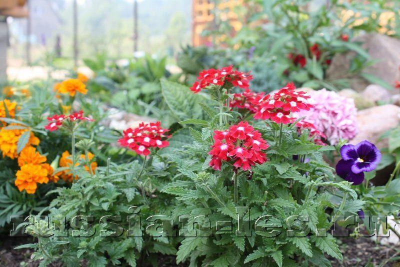 Как подобрать цветы для букетов