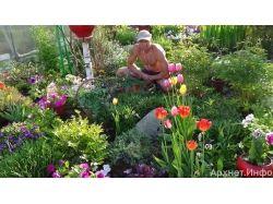 Фото многолетних цветов для дачи