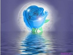 Цветок любви картинки
