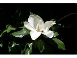 Комнатные цветы фото название цветущие