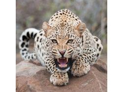 Животные африки фото