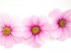 Картинки маленькие цветы
