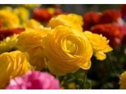 Разные красивые цветы картинки