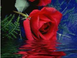 Красивые картинки букеты цветов фото