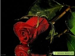 Бесплатно красивые цветы картинки