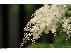 Картинки на заставку цветы