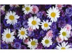 Большие картинки цветы