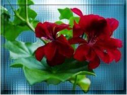 Дидактические картинки цветы