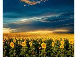 Природа картинки фото лето