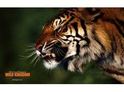Смотреть картинки бесплатно про животных