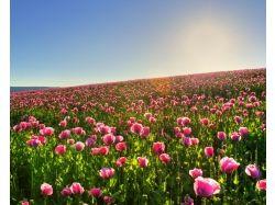 Бесплатные картинки цветов