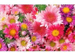 Большие картинки красивые цветы