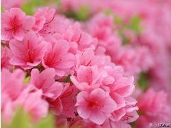 Скачать красивые картинки с цветами