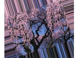 Картинки самых красивых цветов мира