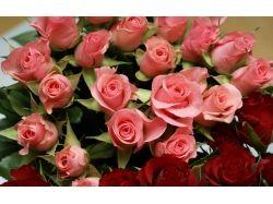 Цветы разные фото