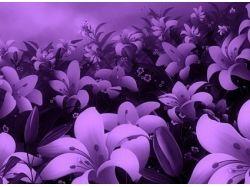 Поля цветов фото