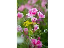 Цветы профессиональные фото