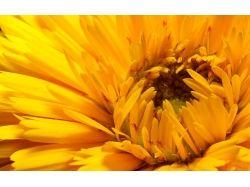 Фото цветов крупным планом