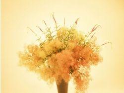 Профессиональные фото цветов