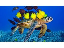Обои для рабочего стола скачать бесплатно подводный мир
