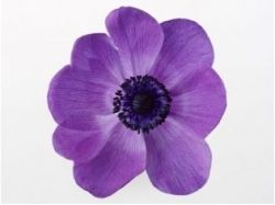 Цветок маленький картинки