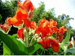 Цвет баклажана фото