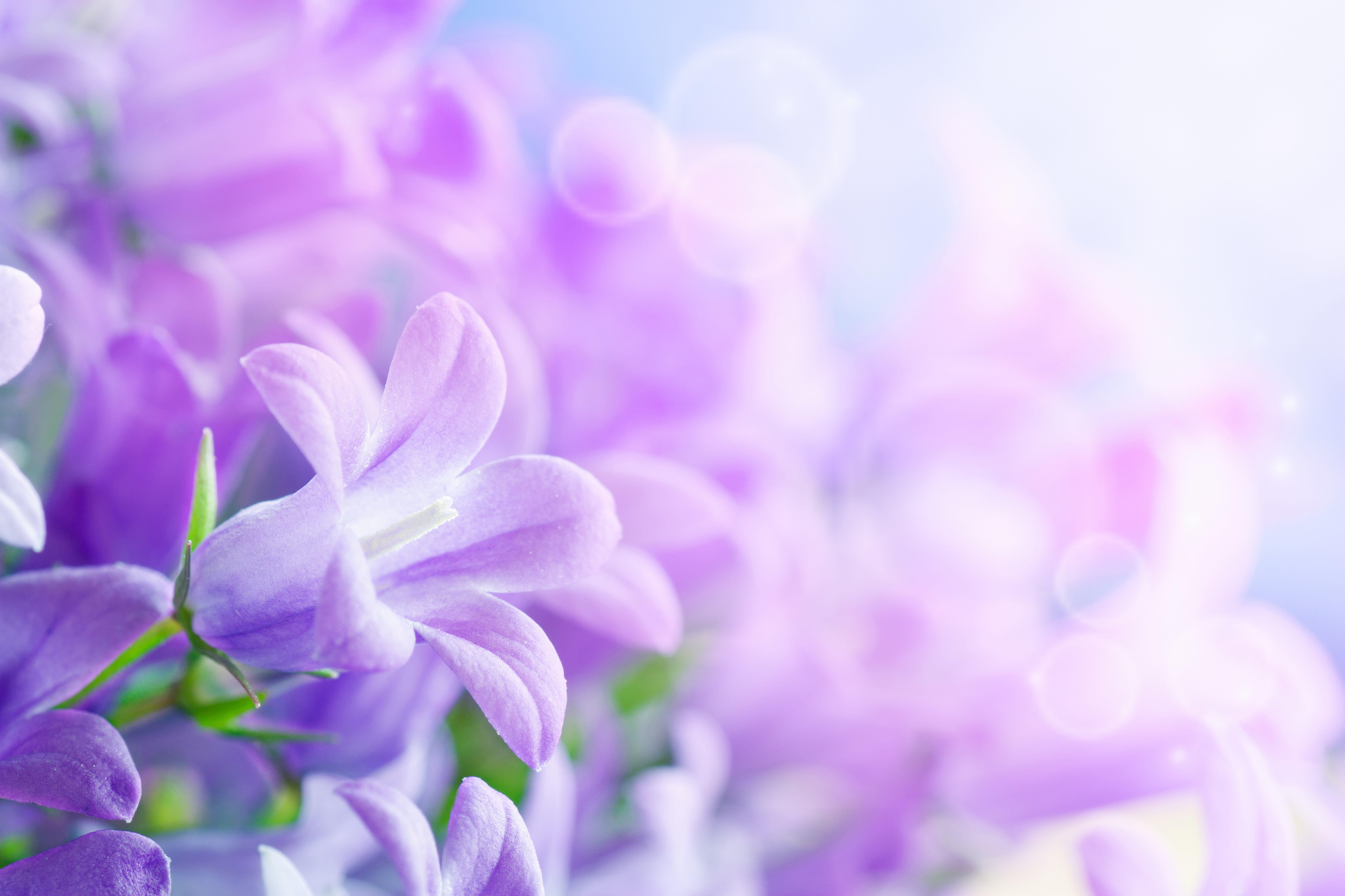 Фиолетовые цветы размытый фон скачать