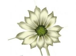 Цветок без фона картинка
