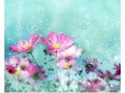 Картинки цветов для детей ромашка