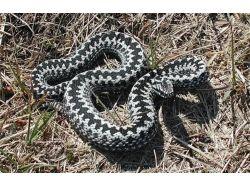 Смотреть фото змей
