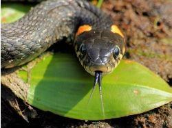 Смотреть фото змей 2