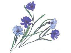 Фото цветка василька