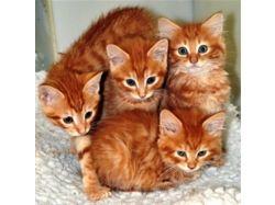 Смешные фото котят и щенят