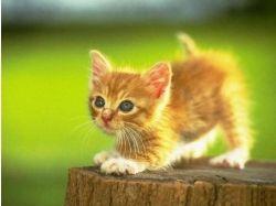 Котята прикольные картинки