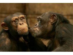 Окружающий мир классы животных 9