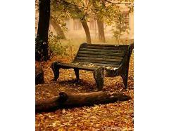 Картинки с золотой осенью