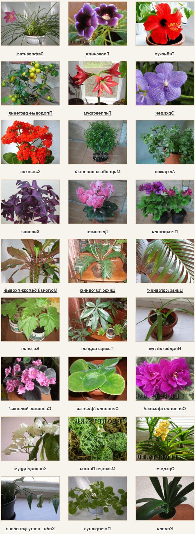 одном виды комнатных растений в картинках все о них камера