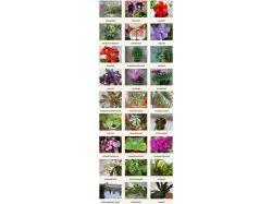 Каталог комнатных цветов в картинках