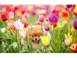 Обои на рабочий стол красивые весна