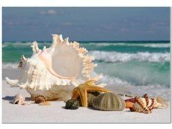 Фото море пляж пальмы