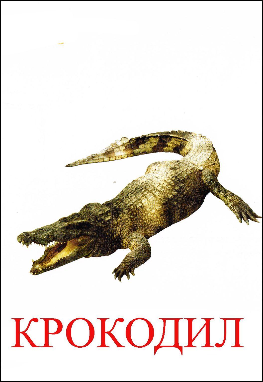 организм карточки крокодил картинки этот солнечный