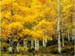 Картинки осень ноябрь