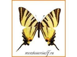 Картинки для детей бабочка